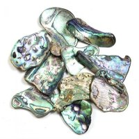 Paua Shell Pieces Abalone - Large Size